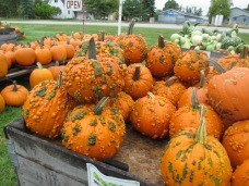 Strange Pumpkins