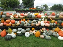 A colorful display of squash