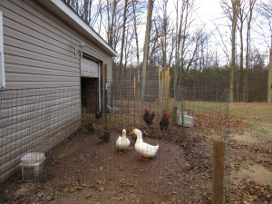 The duck and chicken pens now have short fencing.