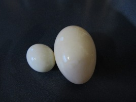 A regular sized duck egg and a tiny fairy egg.