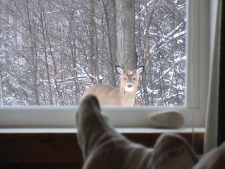 EJ watching the deer watching him.