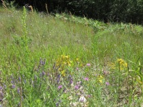 Lavender, Bee Balm, St. John's Wort, and other wildflowers