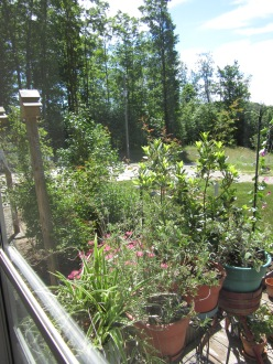 The Flower Garden from inside the house