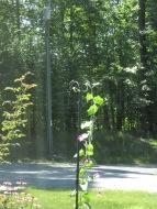 The Hummingbird on the pole