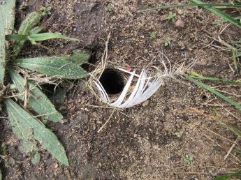 Enlarged hole