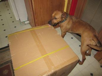 Oh, boy! A new box!