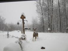Deer watching us