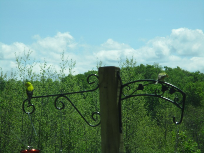 Mr. and Mrs. Goldfinch