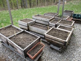 My planted garden